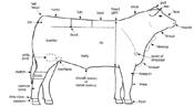 beef-market-body-parts