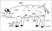swine-body-parts