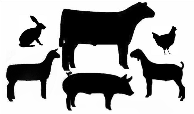 silhouettes-of-livestock