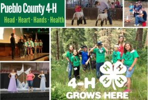 Image of 4-H members engaged in sheep project, fashion revue, and at camps.