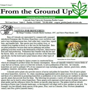 cover of from the ground up newsletter with a bee on a flower