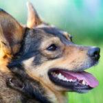 Dog Project
