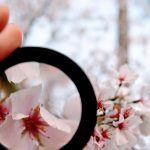 flower under magnifying glass