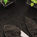 small seedlings dark soil garden shovels
