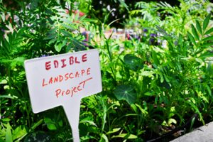 edible landscape project