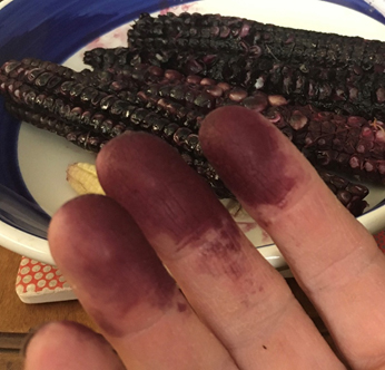 purple stain on hands from corn kernels