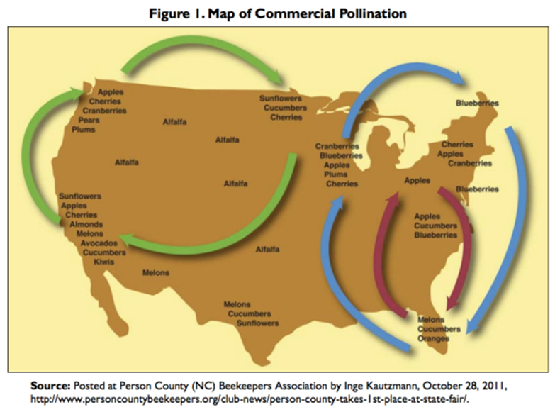 chart of united stats showing pollination migration patterns