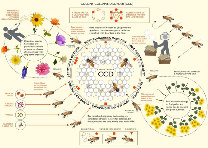 graphic showing colony collapse disorder