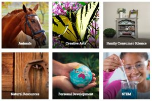 project resoures with photo of horse for animals, butterfly for creative arts, bookshelf for family consumer science horseshoe for natural resources globe for personal development African American girl wearing goggles for STEM