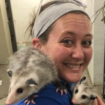hollie david woman wearing blue shirt holding two opposums