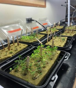 eight trays of plant seedlings