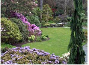 backyard landscape including green grass wooden bench various trees and purple flowers