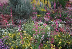 variety of flowers pink yelloe green purple