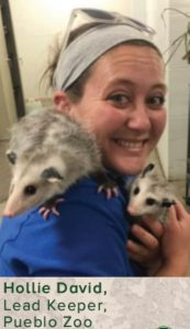 Caucasian woman wearing beigh hair band, blue shirt, with two opossums on her shoulders